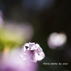 想いでのカタクリの花