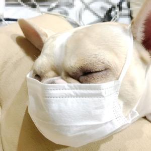 犬の口臭の原因と対策予防|犬の口臭は病気のサインかも!