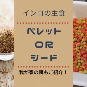 【インコのエサ】ペレットとシードを比較!主食はどっちがいい?