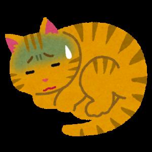 猫にも新型コロナ感染を確認