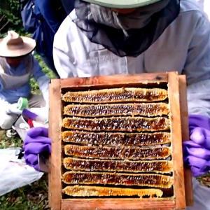 採蜜体験イベントを開催しました