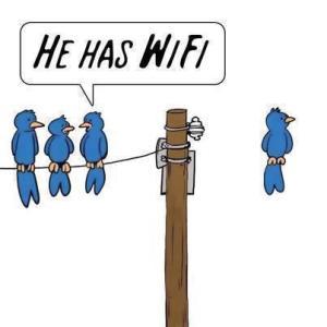 wifi があればこうなる‼️ lucky bird