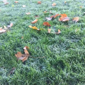 イギリスはもう完璧に冬ですね! It's winter in England!