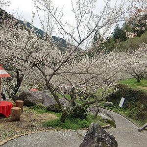 219 【イベント情報】梅まつりと 日帰り温泉  [Event Information] Plum Festival and Day Trip Hot Spring