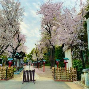 不思議な音が!関東最古の大社 鷲宮神社