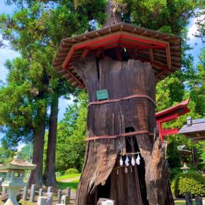 日本武尊が手植えしたと伝わる樹齢1400年の神代杉