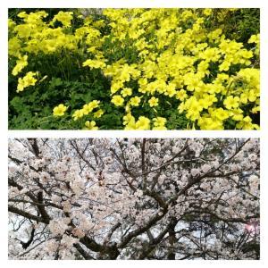 ♡ 春を感じる1日 ♡