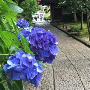 五感で感じる四季の移り変わり〜日本人独特の自然観