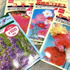 ダイソーの種は2個で100円~種類も豊富