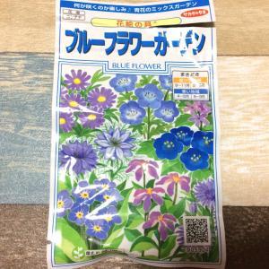 サファイア色のお花が咲いた