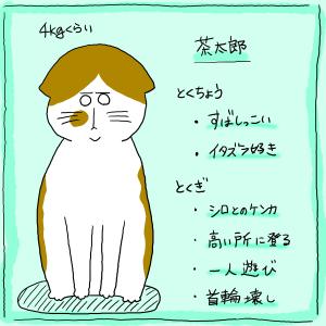 猫たちの紹介です。