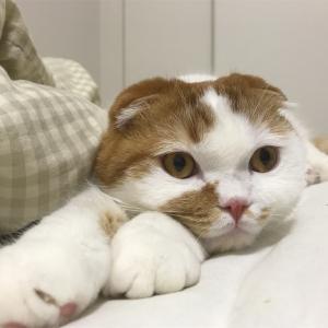 猫の爪切りができるようになった方法