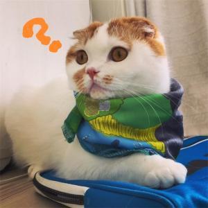 スカーフ可愛くない??
