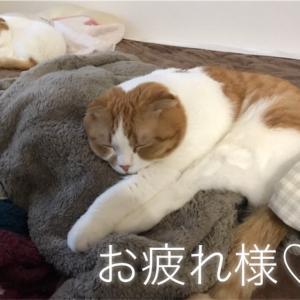猫たちの健康診断行ってきました