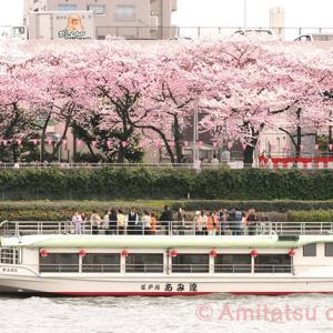 2020年東京のお花見屋形船(その2)