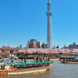 2020年東京のお花見屋形船(その3:桜の開花予想)