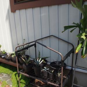 植物を室内から外へ