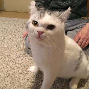猫さんのお友達。