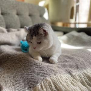 ネコの冬支度を愉しむ