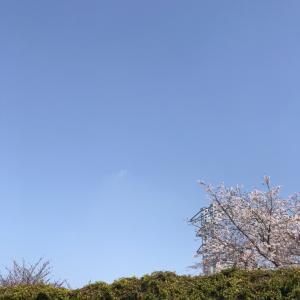 春だなぁ・・・☺️