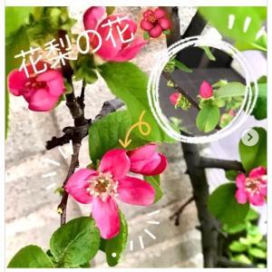 【 つぼみ ⚬ ⇢ 花 ❀ 咲いたよ✧】