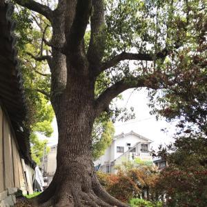 ちょっとびっくり✨ご近所の片埜神社⛩✨