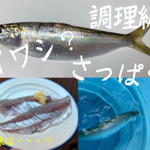 冬の湘南調査〜調理編〜
