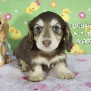 12月24日生まれの子犬ちゃん