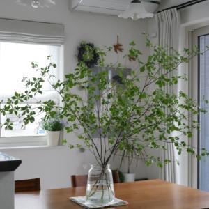 【リビング全景】憧れのドウダンツツジがある風景♡ネットで買うフレッシュ枝もの!!リアルレポ♪