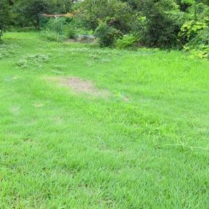 雨の合間に除草