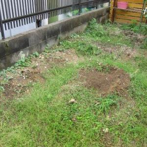 孫宅菜園と柴犬フク