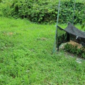 草刈り ジズライザーワイド120