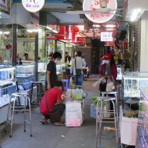 新型コロナ カンボジアの状況 6月21日 フン・セン首相が隔離に