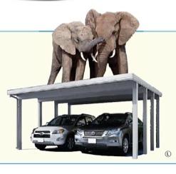 象が2頭乗っている@庭楽育ささやまBASE