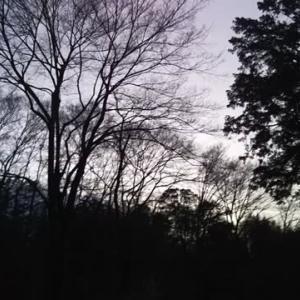 冬の桜です🎵