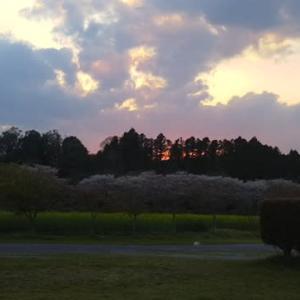 春の夕焼けです*