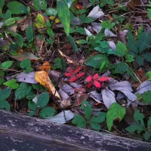 小さい秋見つけた、