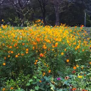 秋の花壇ですね❗