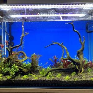 アクアリウム再スタートの経過報告!水カビや藍藻対処はどうする?