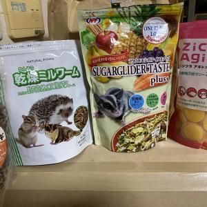 フクロモモンガには何を与えたらいいの?食性とおすすめの食材
