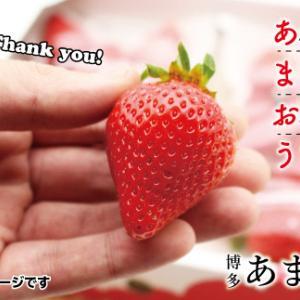 【ふるさと納税】福岡県宗像市より返礼品をいただきました。