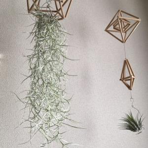 悲喜こもごも 冬の植物たち