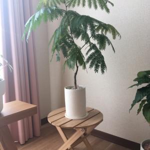 日差しをよろこぶ観葉植物たち