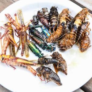 昆虫食とかいうWHOもイチオシの食糧危機対策「これにはベアニキも苦笑い」「日本にはイナゴの佃煮あるから」「長野県とかいう先進地域」
