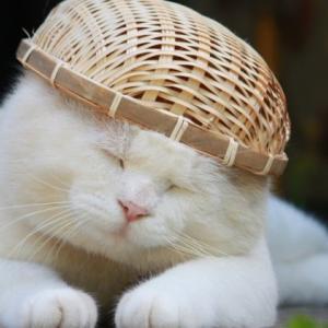 映画「Cats」から学ぶ*過去の栄光を手放して、媚びずに生きよう。