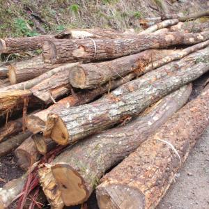 今年の薪になる原木が来た