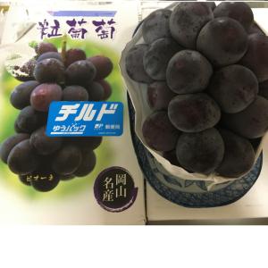 【優待絵日記】おっきいー!大黒天物産の大粒ピオーネ
