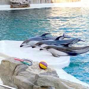 体験型水族館「城崎マリンワールド」でイルカショーなど楽しみました