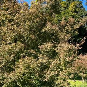 緑の葉から色づいていくアーティスト名について
