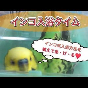 【インコおもしろ動画】良い湯だなアハハン!